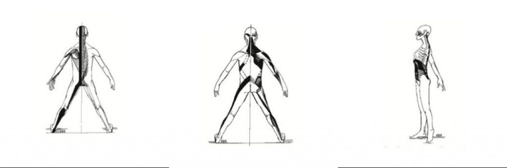 Cadena muscular posterior